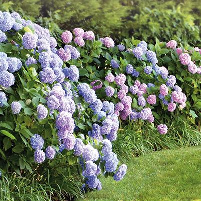 Gartenpflanzen  Gartenpflanzen