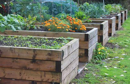Hochbeet Bepflanzen ǀ Toom Baumarkt