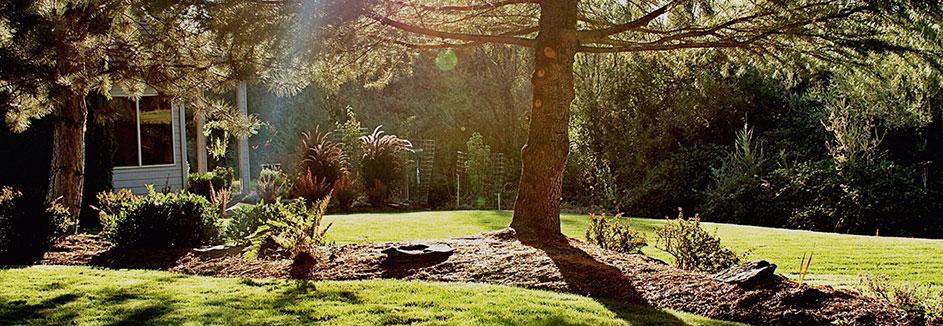 Bäume Sträucher ǀ Toom Baumarkt
