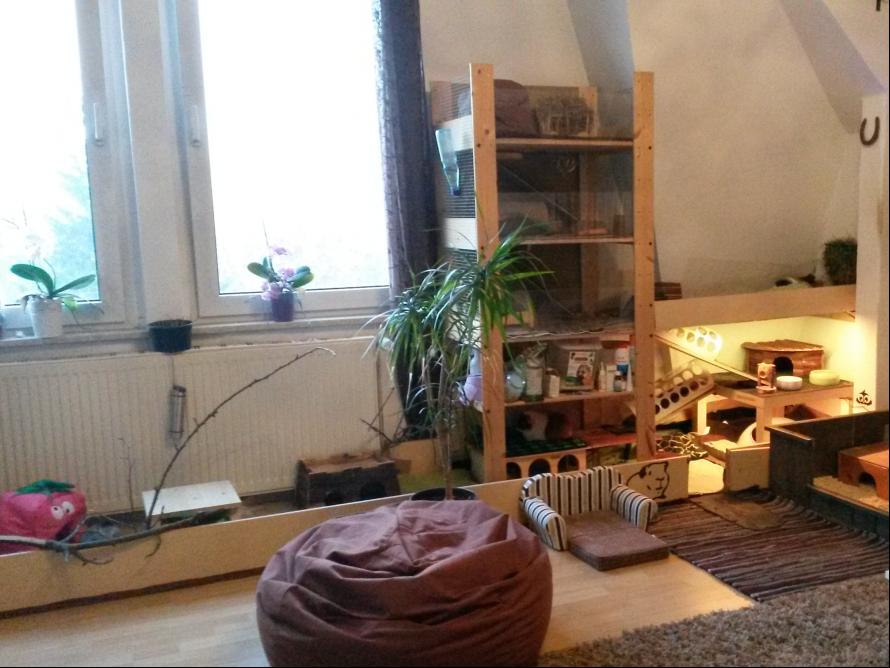 toom kreativwerkstatt meerschweinchen eigenheim. Black Bedroom Furniture Sets. Home Design Ideas